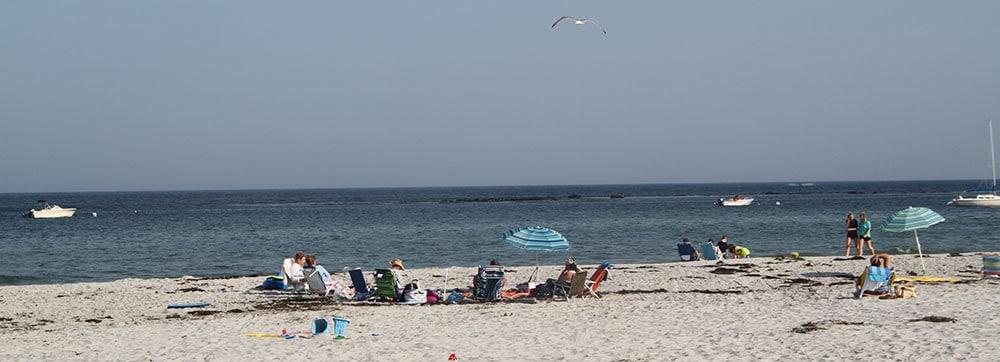 goose-rocks-beach-seagull