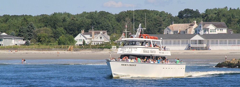 kennebunkport-whale-watch